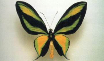 medium_butterfly.jpg