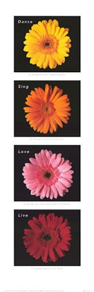 medium_flores2.2.jpg