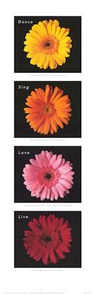 medium_flores2.3.jpg